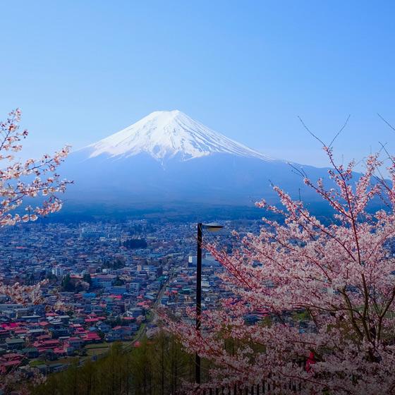 Tour + Hotels: Japan