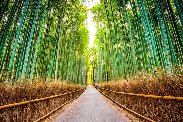 Bamboo Forest of Sagano, Kyoto