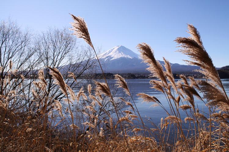 Mt Fuji & Hakone 1 day tour