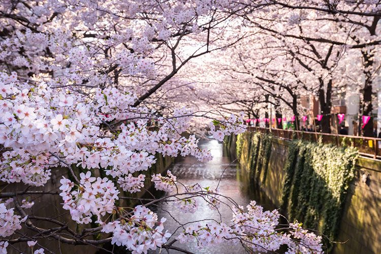 Meguro Canal, Tokyo