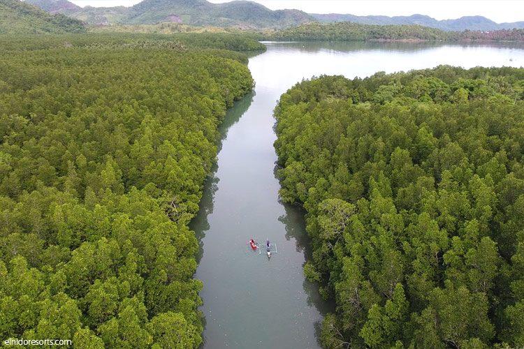 El Nido Resorts Activities - Mangrove Tour