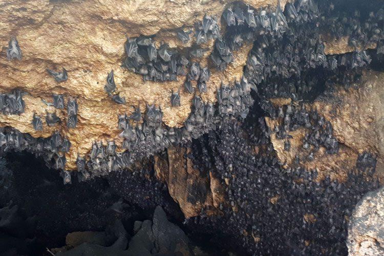 Bat Cave, Boracay